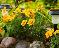 How Good Are Solar Garden Lights