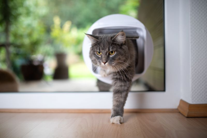 Best Microchip Cat Flap