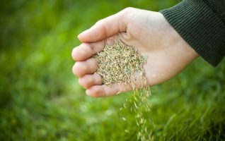best grass seed 2019