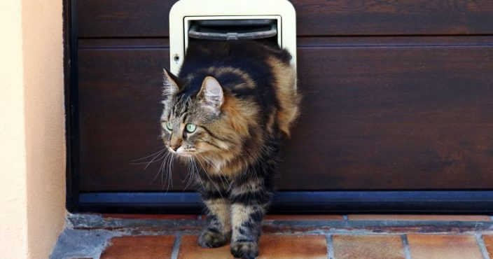 How To Program A Sureflap Cat Flap