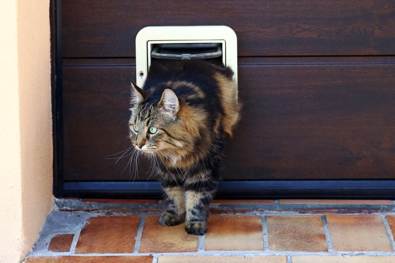How To Program A Sureflap Cat Flap