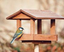 best bird tables